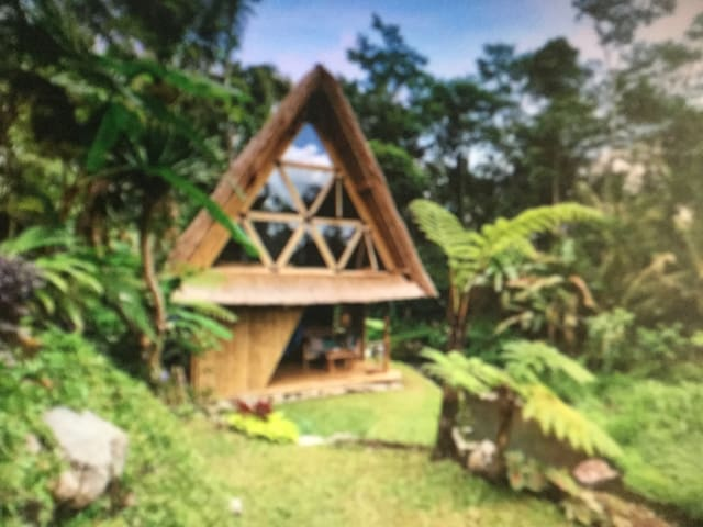 A unique ecological accommodation