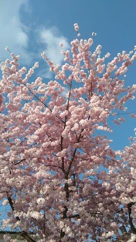 Weiß-Blau mit zart-rosa.