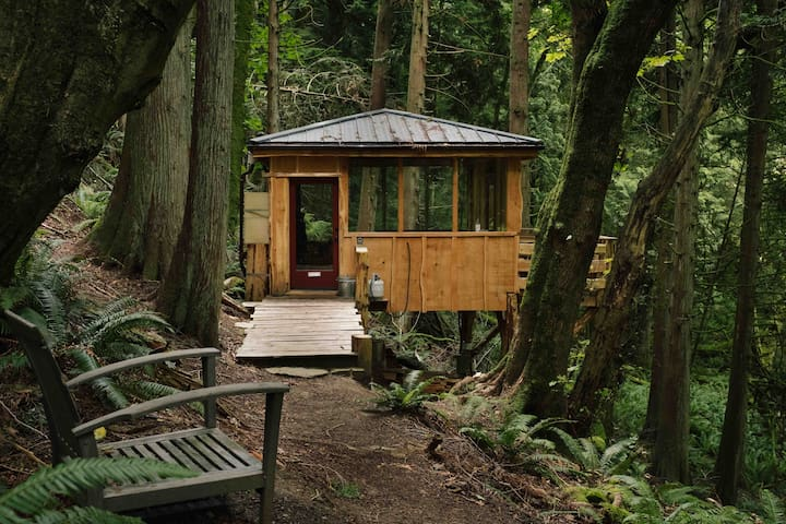 Secluded Forest Cabin on Chuckanut