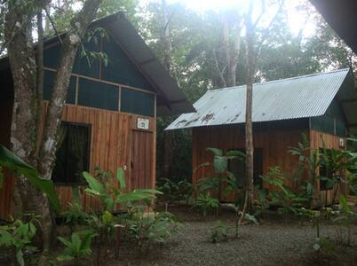 Our 5 bungalows are situated in the middle of the secondary forest and along the Quebrada Ignacia. Each one has the name of the four species of monkeys in the country and the most common butterfly in the area. Congo Bungalow and Cariblanco Bungalow: