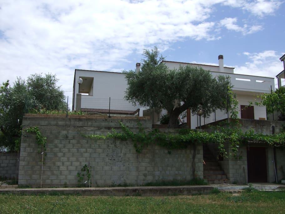 il giardino con gli alberi da frutto, vigneto e ulivi