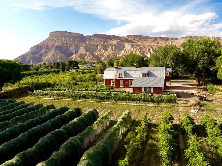 Beautiful Vineyard Barn House