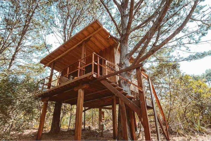 """Treehouse Ecolodge. Casa del árbol """"Guazuvira"""""""