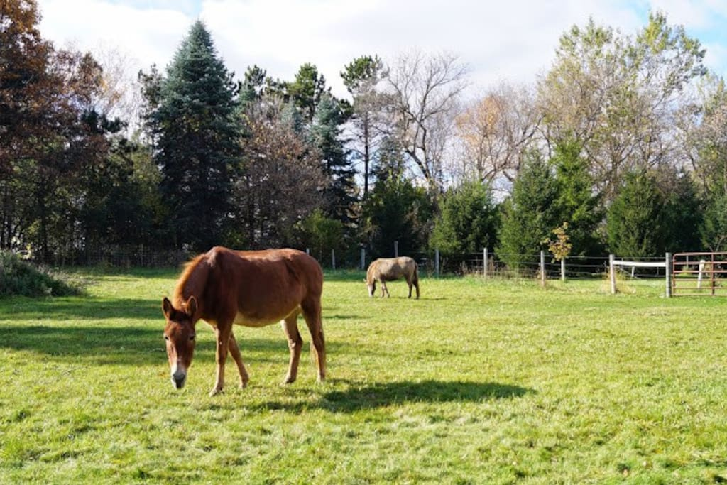 Gert and Goldie in the pasture