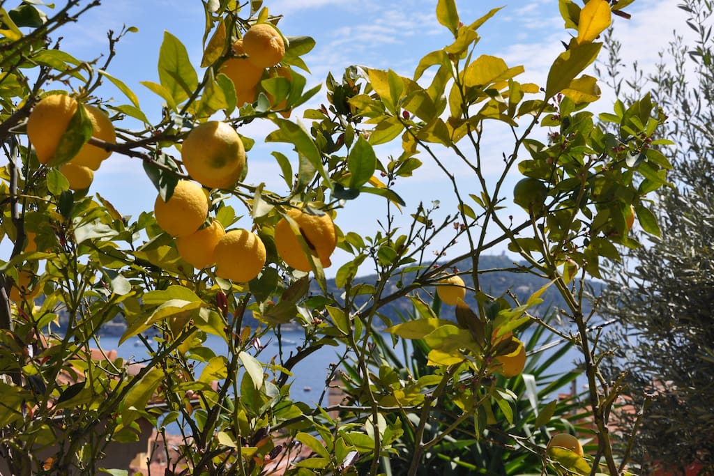 Vue mer à travers le citronnier / Seaview through the lemon tree