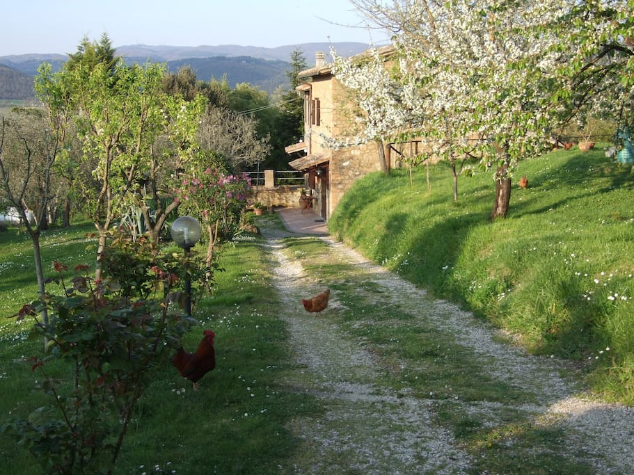 Podere la vigna casa per vacanze houses for rent in for Piani di casa di log artigiano