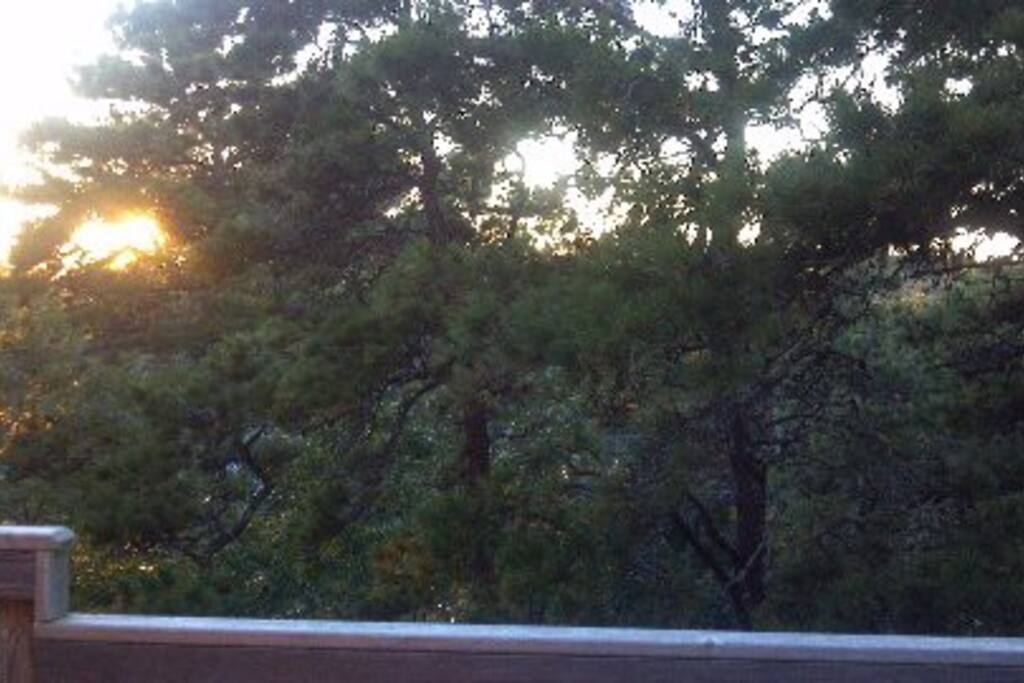 Tree top views of sunset from deck