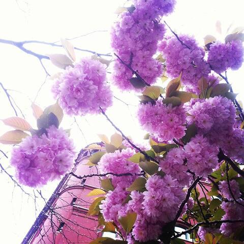 Spring in Bushwick