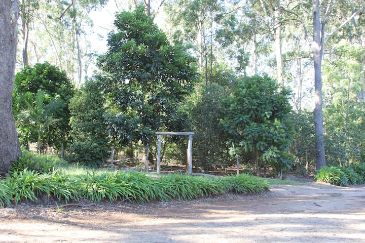 Adjacent to our house we have created our very own rainforest walk. Such a cool place to simply sit and listen to the birds.