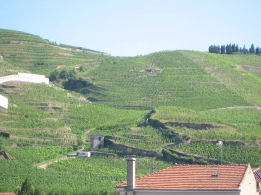Vignoble de l'hermitage