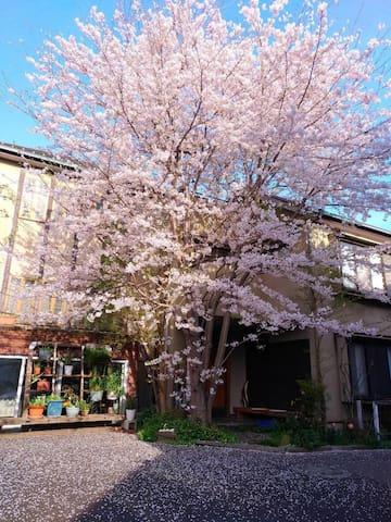 Diplomat House  - Ōta-ku - House