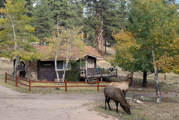 Rocky Mountain Getaway Edge Of Rmnp Cabins For Rent In
