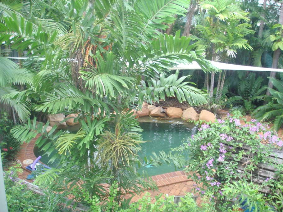 Private salt water pool surrounded by rainforest gardens