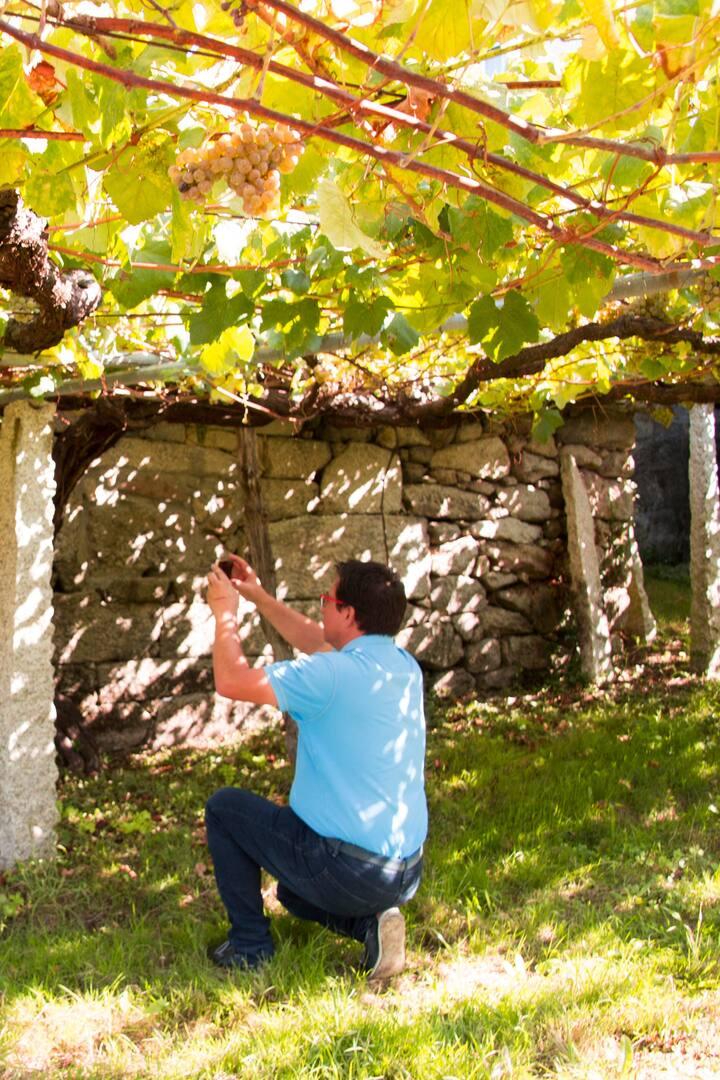 visita a viñedo