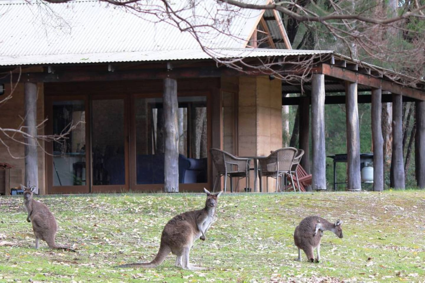 Kangaroos just outside your chalet