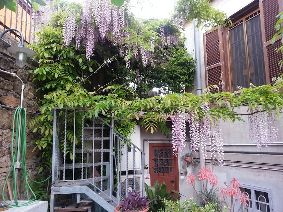 entrance with wisteria in bloom