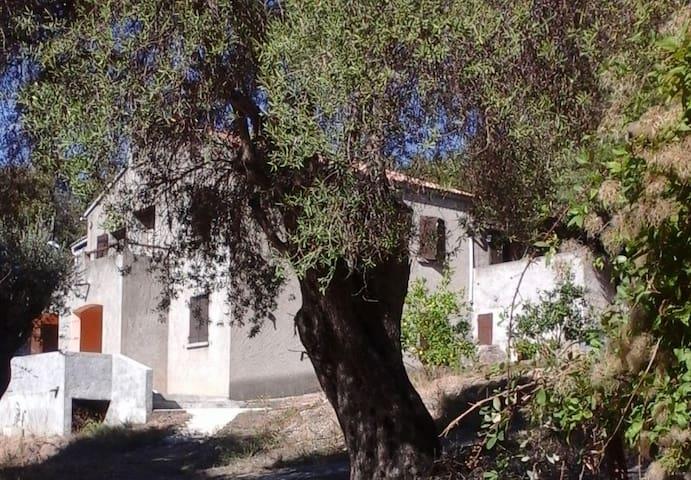 A CASA DI L'ALIVU - Studio Amandula - Patrimonio