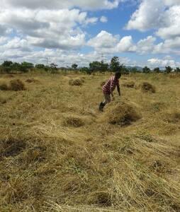 Mbusi Farm - Kwa Nguma
