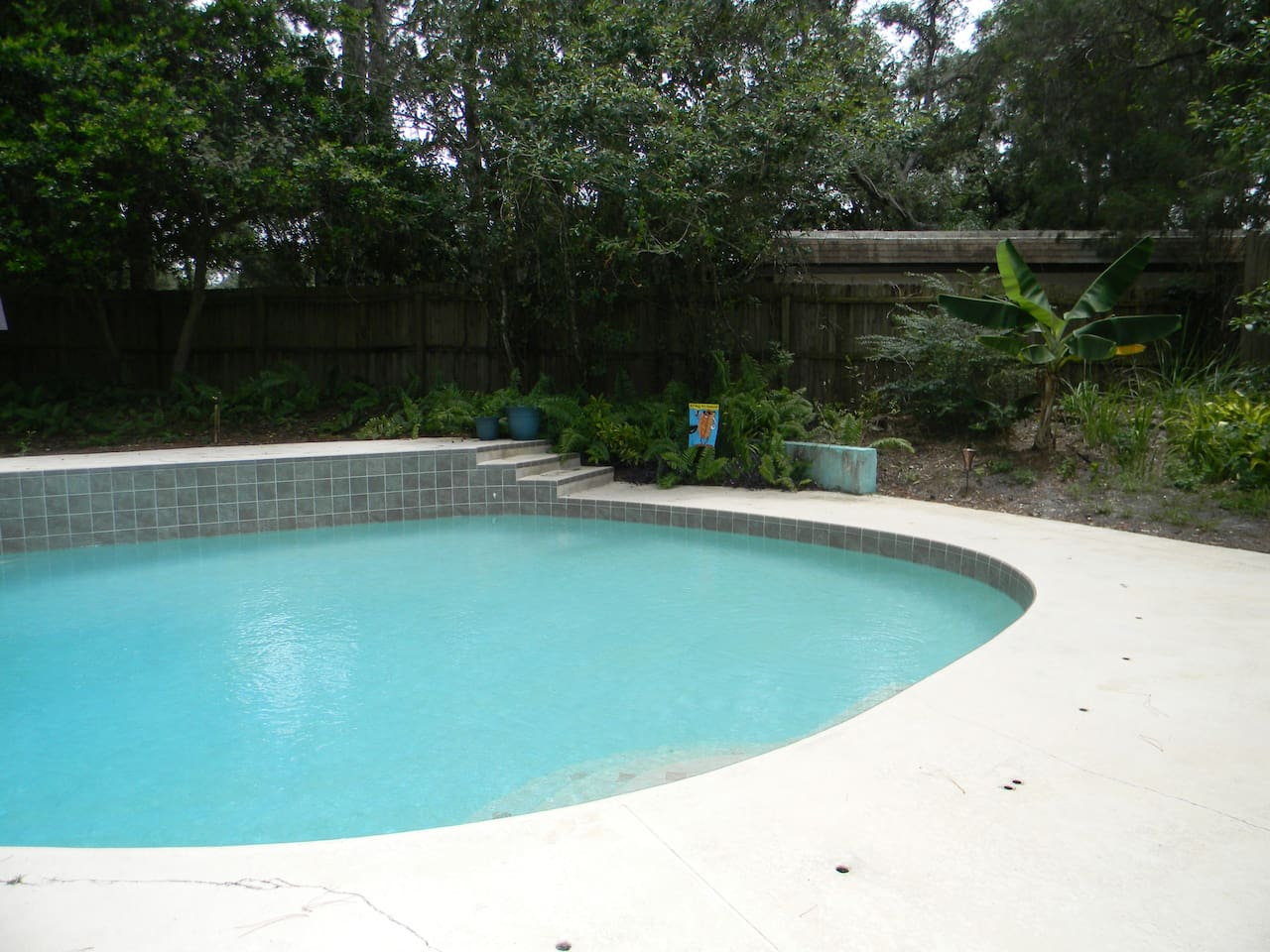 Shallow End of the pool with stair entrance and banana tree to the right.