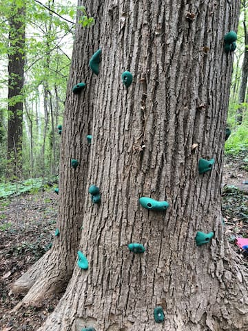 "This is our ""climbing tree."" It's two  trees positioned closely together and bolted with climbing holds."