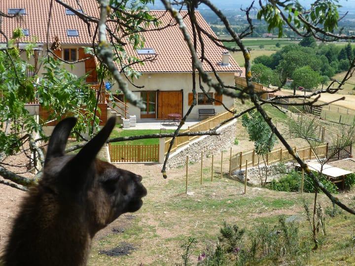 Le gîte de la Bruyère aux lamas