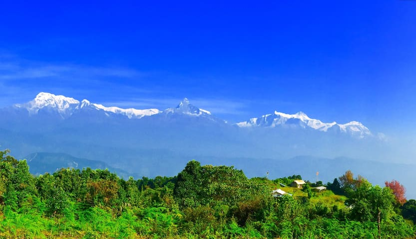 Adam Tribe - Pokhara