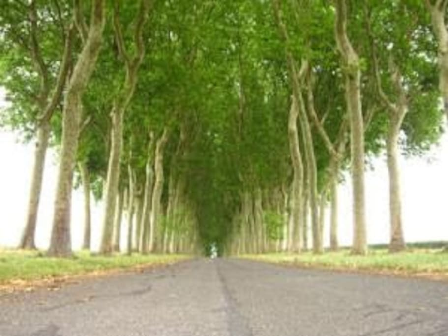 Long driveway off main road from Lizy sur Ourcq leading to the Chateau de la Trousse.