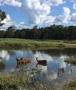 Rockn Rowdy Ranch - A Wonderland of Animals! - House