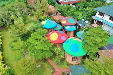 Leafy Greens Chiangmai : Mushroom M4