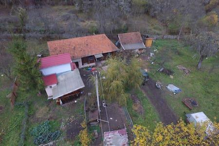 Grădina Edenului Bratea, Romania, Balșa - Balșa - 自然小屋