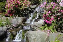 Rhododendron Garden
