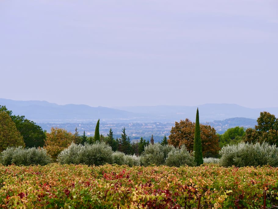 Long distance views across vineyards to the Durance valley.