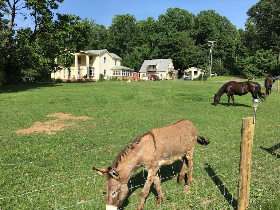 Horses and donkeys sometimes graze front of house