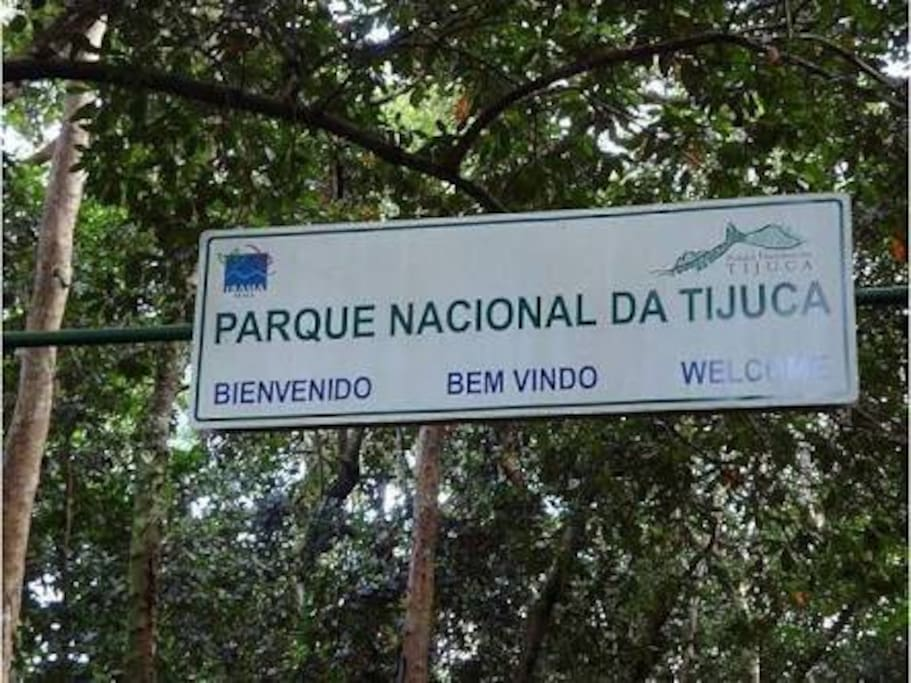 The beautiful National Park of Tijuca