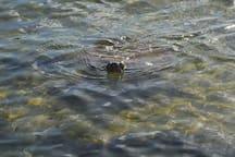 Turtle Upclose