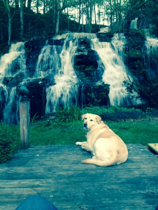 Our dog Halle by the waterfall