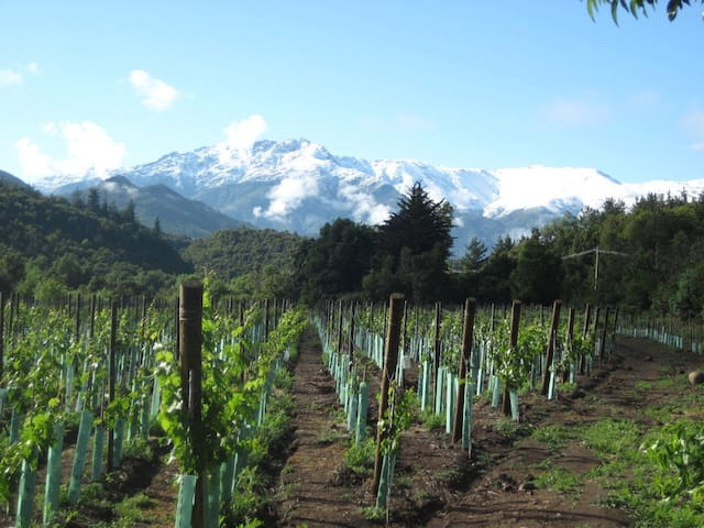 Boutique Mountain Lodge & Vineyard - San Fernando