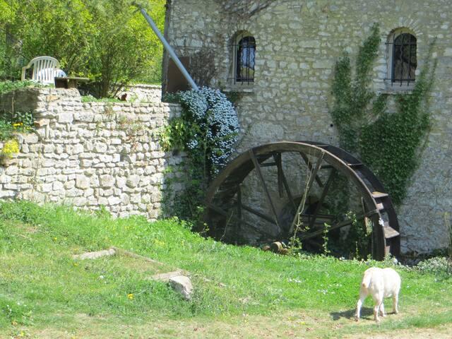 The mill's decorative wheel. Alaska our adorable labrador.