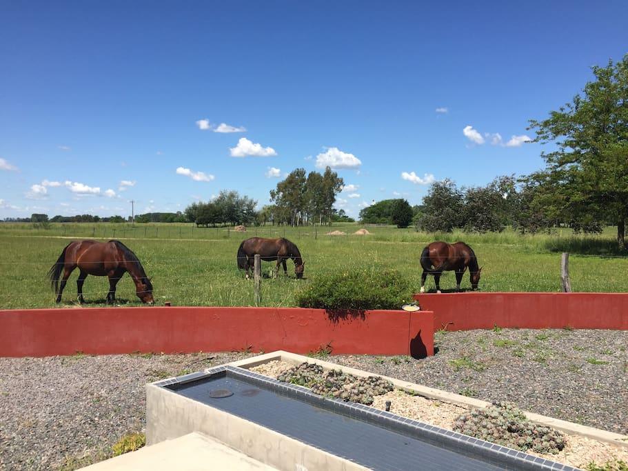 Sentirse en un campo Argentino,polo,equitación y cabalgatas,servicio de hotelería en el club house
