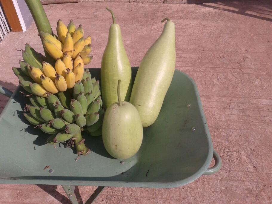 Organic banana and vege from garden
