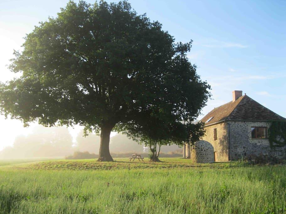 Back garden - photo taken on a summer's morning