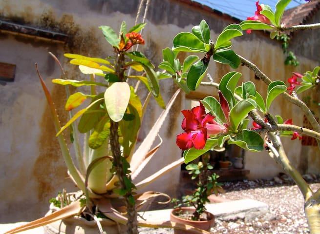 In the Heart of Historical Oaxaca