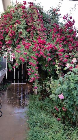 roses over trellis