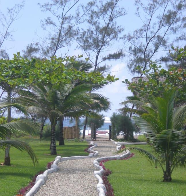 Beachfront garden