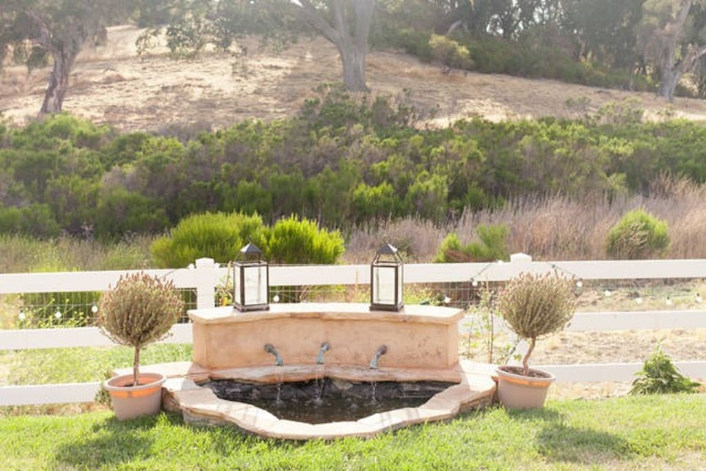 Our fountain with a view of the oak trees.