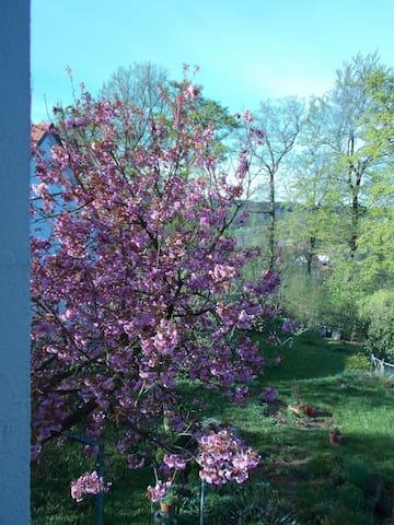 Mittendrin in Bi: Zimmer im Grünen - Bielefeld - Bed & Breakfast