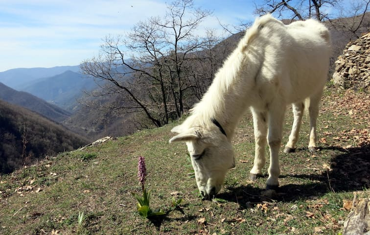 Our Mule with the view from the garden.