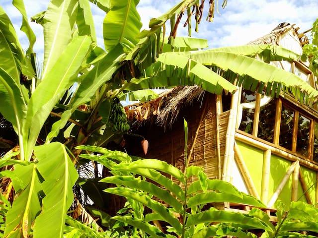 La Jungla Bungalows- Vanuatu - Mompiche