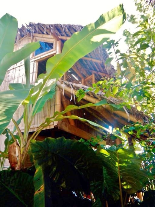 Overview of 4-person tropical bungalow. In secluded jungle garden but only 50m from the beach!