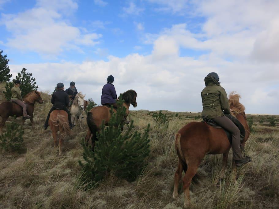 Fantastiske naturoplevelser til hest, på gåben eller på cykel